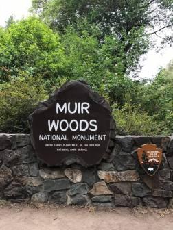 muir woods 1